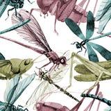 Wildes Insekt der exotischen Grillen in einem Aquarellartmuster Stockbilder