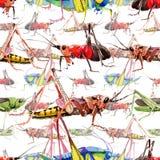 Wildes Insekt der exotischen Grillen in einem Aquarellartmuster Lizenzfreies Stockfoto