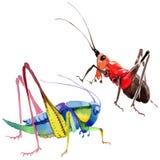 Wildes Insekt der exotischen Grillen in einer Aquarellart lokalisiert Lizenzfreie Stockfotografie