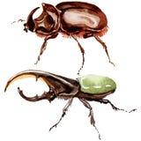 Wildes Insekt der exotischen Käfer in einer Aquarellart lokalisiert Stockfotografie