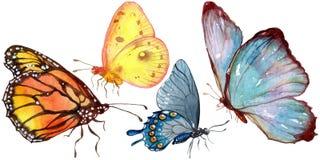 Wildes Insekt der exotischen Schmetterlinge in einer Aquarellart lokalisiert stock abbildung