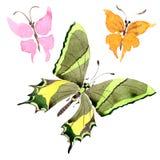 Wildes Insekt der seltenen Schmetterlinge in einer Aquarellart lokalisiert Lizenzfreies Stockfoto