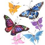 Wildes Insekt der seltenen Schmetterlinge in einer Aquarellart lokalisiert Stockbild