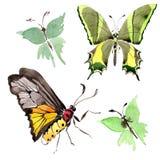 Wildes Insekt der seltenen Schmetterlinge in einer Aquarellart lokalisiert Stockfotografie