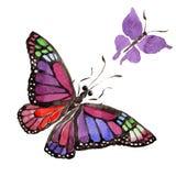 Wildes Insekt der seltenen Schmetterlinge in einer Aquarellart lokalisiert Stockfotos