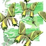 Wildes Insekt der seltenen Schmetterlinge in einer Aquarellart Nahtloses Hintergrundmuster Gewebetapeten-Druckbeschaffenheit Lizenzfreie Stockfotografie