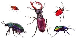 Wildes Insekt des exotischen Käfers in einer Aquarellart lokalisiert lizenzfreie abbildung