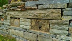 Wildes Insektenhotel ausführlich Stockfotos