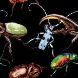 Wildes Insektenmuster der exotischen Käfer in einer Aquarellart Lizenzfreie Stockbilder