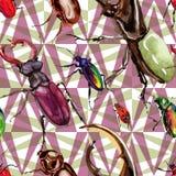 Wildes Insektenmuster der exotischen Käfer in einer Aquarellart Lizenzfreies Stockbild