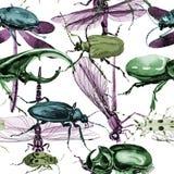 Wildes Insektenmuster der exotischen Käfer in einer Aquarellart Lizenzfreie Stockfotos