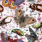 Wildes Insektenmuster der exotischen Käfer in einer Aquarellart Stockfotografie