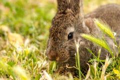 Wildes Kaninchen Stockfotos