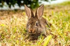 Wildes Kaninchen Stockfoto