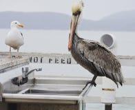 Wildes Leben auf dem Pier lizenzfreie stockfotografie