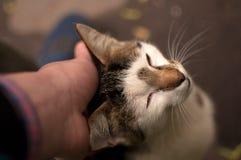 Wildes Leben der Katzen Stockbilder
