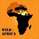 Wildes Leben von Afrika stockfotos