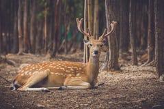 Wildes liebes an der Naturlandschaft Khonkaenzoo Stockfotos