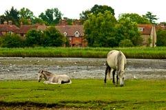 Wildes neues Forrest Pferd Lizenzfreies Stockfoto