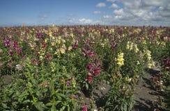 Wildes Orchideenblumenfeld Lizenzfreies Stockfoto