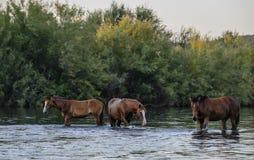 Wildes Pferd stockfotografie