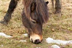 Wildes Pferd auf Wiese Lizenzfreie Stockfotografie