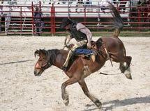 Wildes Pferd, das 4 reitet Lizenzfreie Stockfotografie