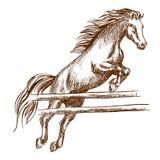 Wildes Pferd, das hoch über Sperre springt lizenzfreie abbildung