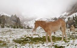 Wildes Pferd in den Dolomit-Bergen Stockfotos