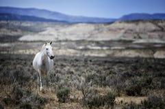 Wildes Pferd des Sand-Waschbeckens szenisch Stockbilder