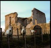 Wildes Pferd im Camargue stockfotos