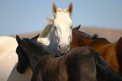 Wildes Pferd mit Fohlen Stockfoto