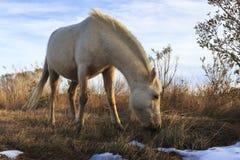 Wildes Pony Lizenzfreies Stockbild