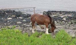 Wildes Pony auf Flussbank Stockfoto