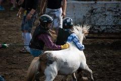 Wildes Ponyrennen stockbild