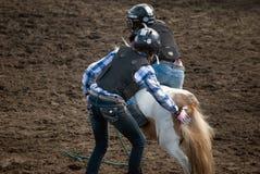 Wildes Ponyrennen Stockfotos