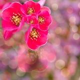 Wildes Rosa blüht Hintergrund Lizenzfreie Stockfotografie