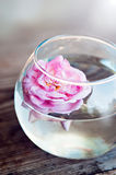 Wildes Rosa Rose in einem Glas stockfoto