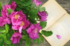 Wildes rosafarbenes Bündel auf verrostetem hölzernem Hintergrund Lizenzfreie Stockbilder