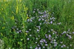 Wildes Sommergras und -blumen Stockfoto
