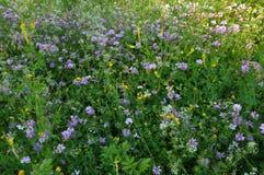 Wildes Sommergras und -blumen Lizenzfreie Stockfotografie