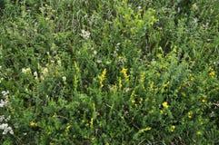 Wildes Sommergras und -blumen Lizenzfreies Stockfoto