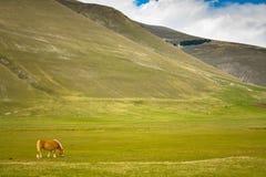 Wildes Tal mit einem Pferd Stockbild