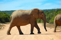 Wildes Tier stockbilder