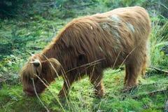Wildes Tier Lizenzfreies Stockfoto