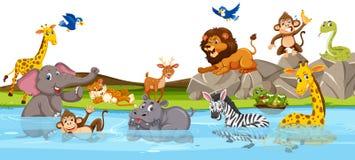 Wildes Tier in dem Fluss lizenzfreie abbildung