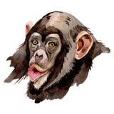 Wildes Tier des exotischen Affen in einer Aquarellart lokalisiert Wildes Tier des Aquarells f?r Hintergrund lizenzfreie abbildung