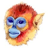 Wildes Tier des exotischen Affen in einer Aquarellart lokalisiert Wildes Tier des Aquarells f?r Hintergrund stock abbildung