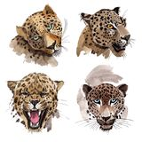 Wildes Tier des exotischen Leoparden in einer Aquarellart lokalisiert vektor abbildung