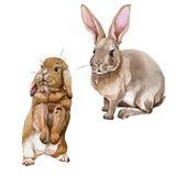 Wildes Tier des Kaninchens in einer Aquarellart lokalisiert vektor abbildung